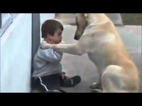 Big Dog Care With Down Syndrome Baby Youtube