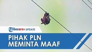 Permintaan Maaf PLN atas Insiden Bocah Bergelayut di Kabel Sling, Janji Lebih Baik dalam Pengawasan