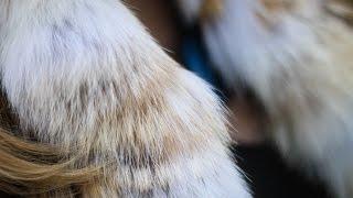 Heather's Couture Corner - Macy's Fur Vault Sale