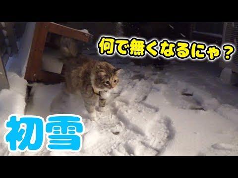 雪国出身のちゃちゃが初めての雪に大興奮!!