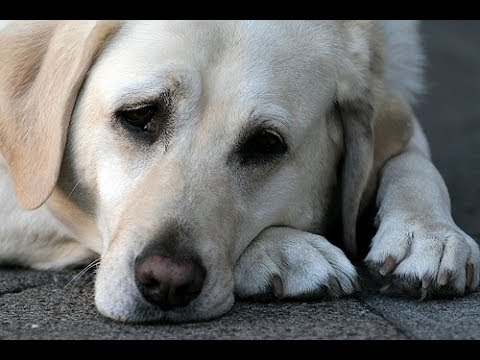 A Dogs Last Minutes Alive- A SAD DOG'S STORY - YouTube  Sad