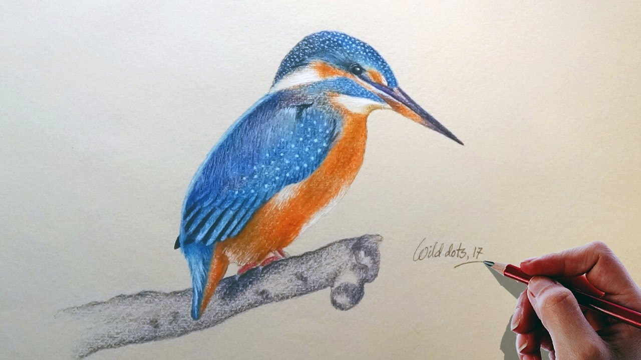 Bird Drawing A Kingfisher Bird Easy And Simple Steps Youtube