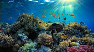 Relaxing Music for Stress Relief, Underwater Ambient, Sleep Music