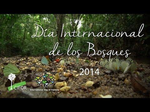 Día Internacional de los Bosques  2014