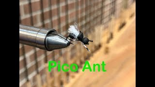 Pico Ant