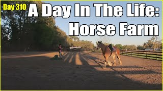 A Day in the Life: Living on a Horse Farm | Daily Vlog Day 310 | Connerton Adventures