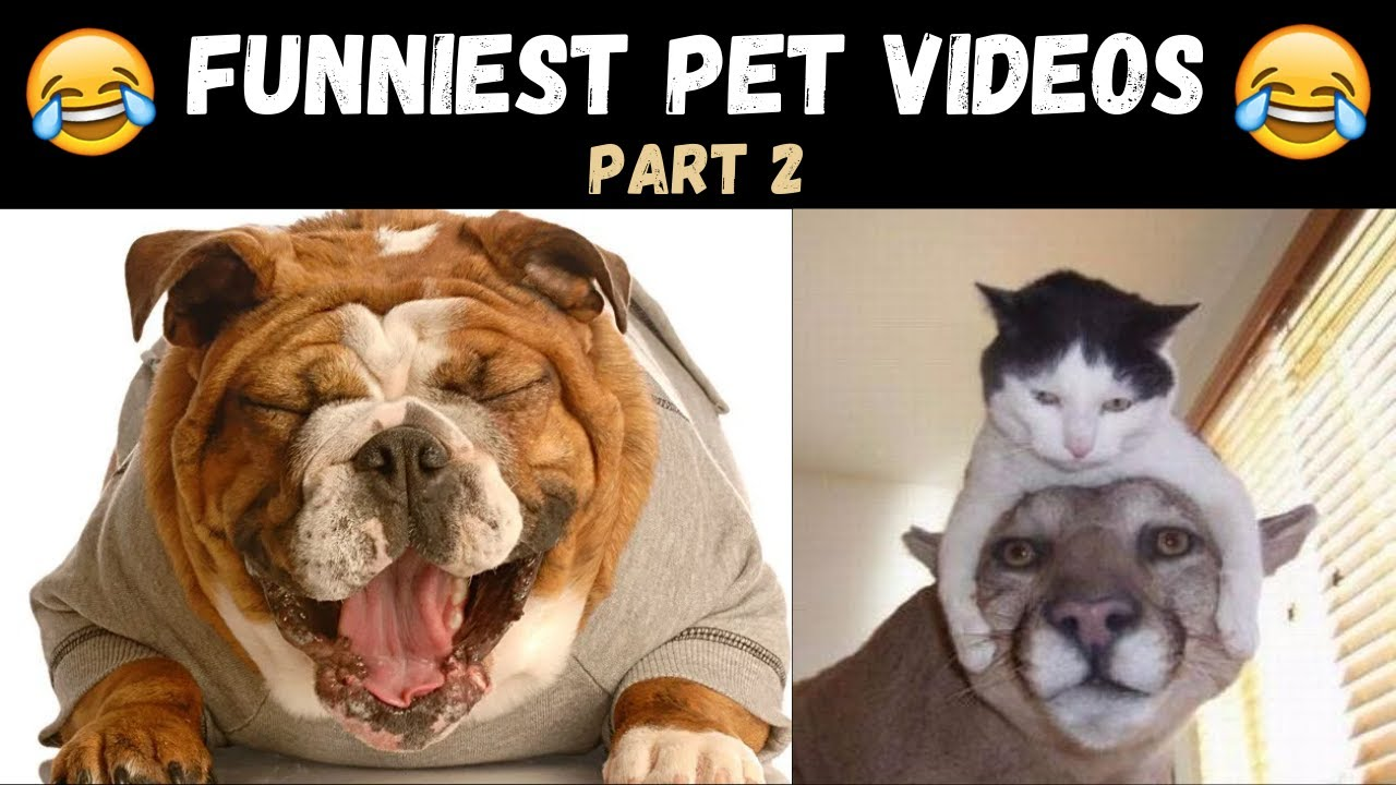 😍 Cute pets doing funny things 2020 #9 | Cute Pets ❤