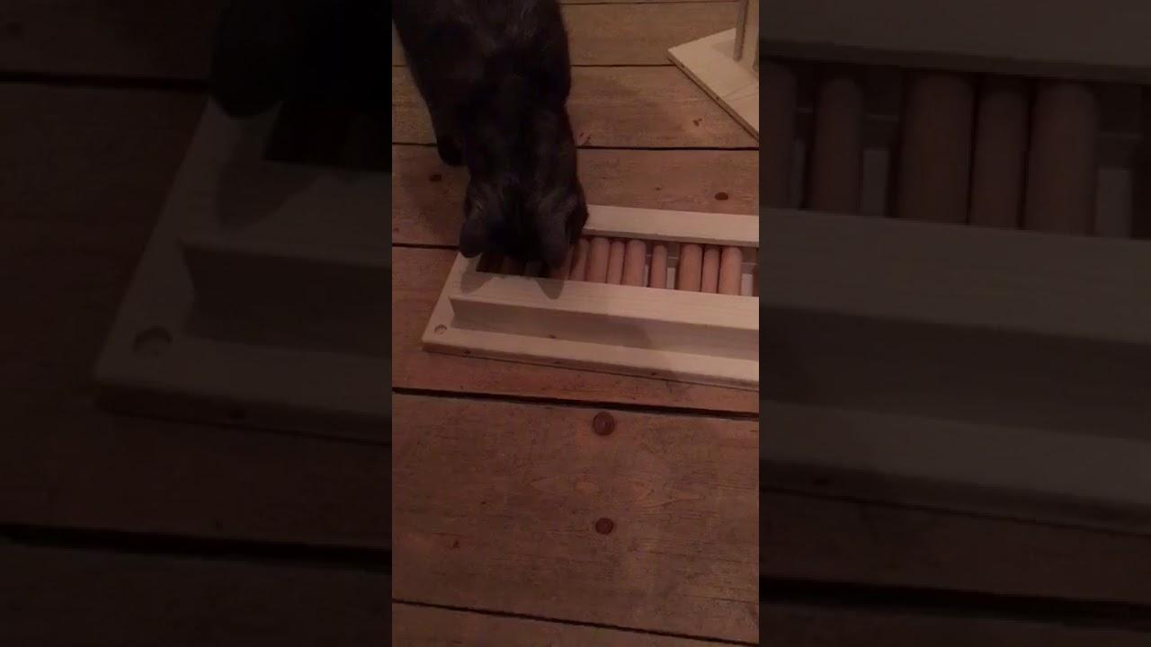 Katzenspile