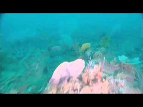 Underwater garden of sea fans, sponges and tropical fish