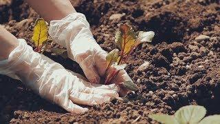 Youtube video Vlog: Vrtičkanje - sajenje sadik
