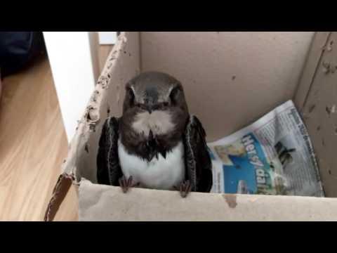Ebabil kuşumuz çok acıkmış..