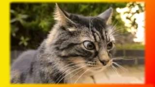 Котята. Кошки Видео о животных Создай себе хорошее настроение