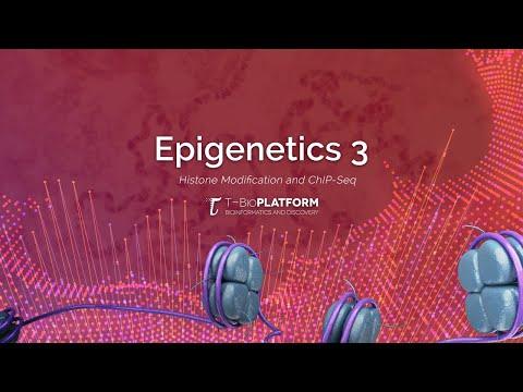 Epigenetics3: Histone Modification