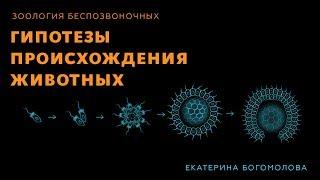 Гипотезы происхождения животных. Зоология беспозвоночных - 5