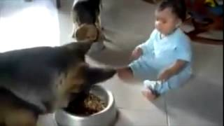 Dog and baby fighting over food, too funny
