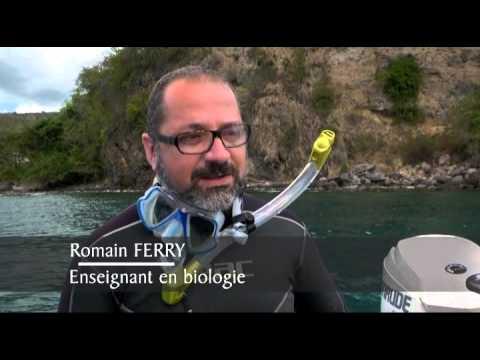 Martinique, sous la mer, les mystères de la vie