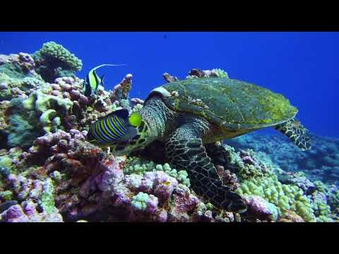 French polynesia diving tour