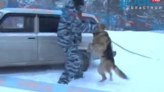 В полиции Златоуста собака-ищейка нашла место жестокого убийства человека