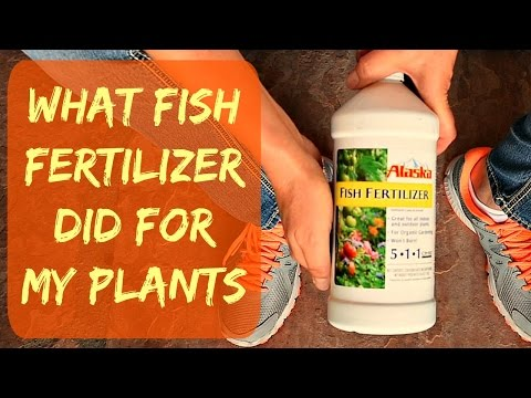 UPDATE - Alaska Liquid Organic Fish Fertilizer For Plants & Vegetables - When & How - Plant Results