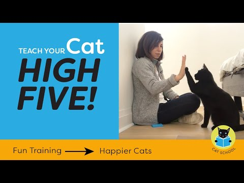Cat Trick: Teach Your Cat To High Five