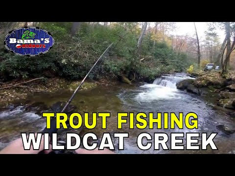 FISHING FOR TROUT AT WILDCAT CREEK IN NORTH GEORGIA
