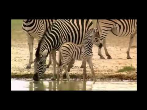 khám phá thế giới động vật ,animal of kalahari