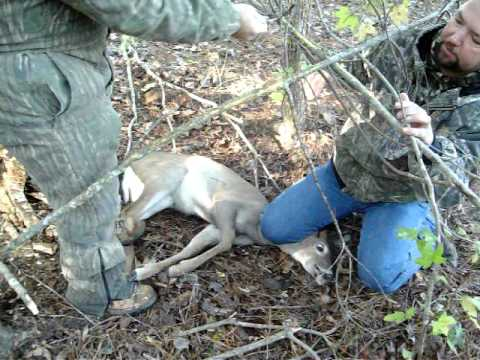 Snare traps for deer deer caught in a snare youtube