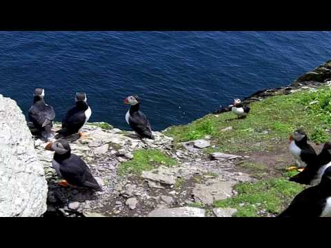 A Journey to Skellig Michael During Puffin Season