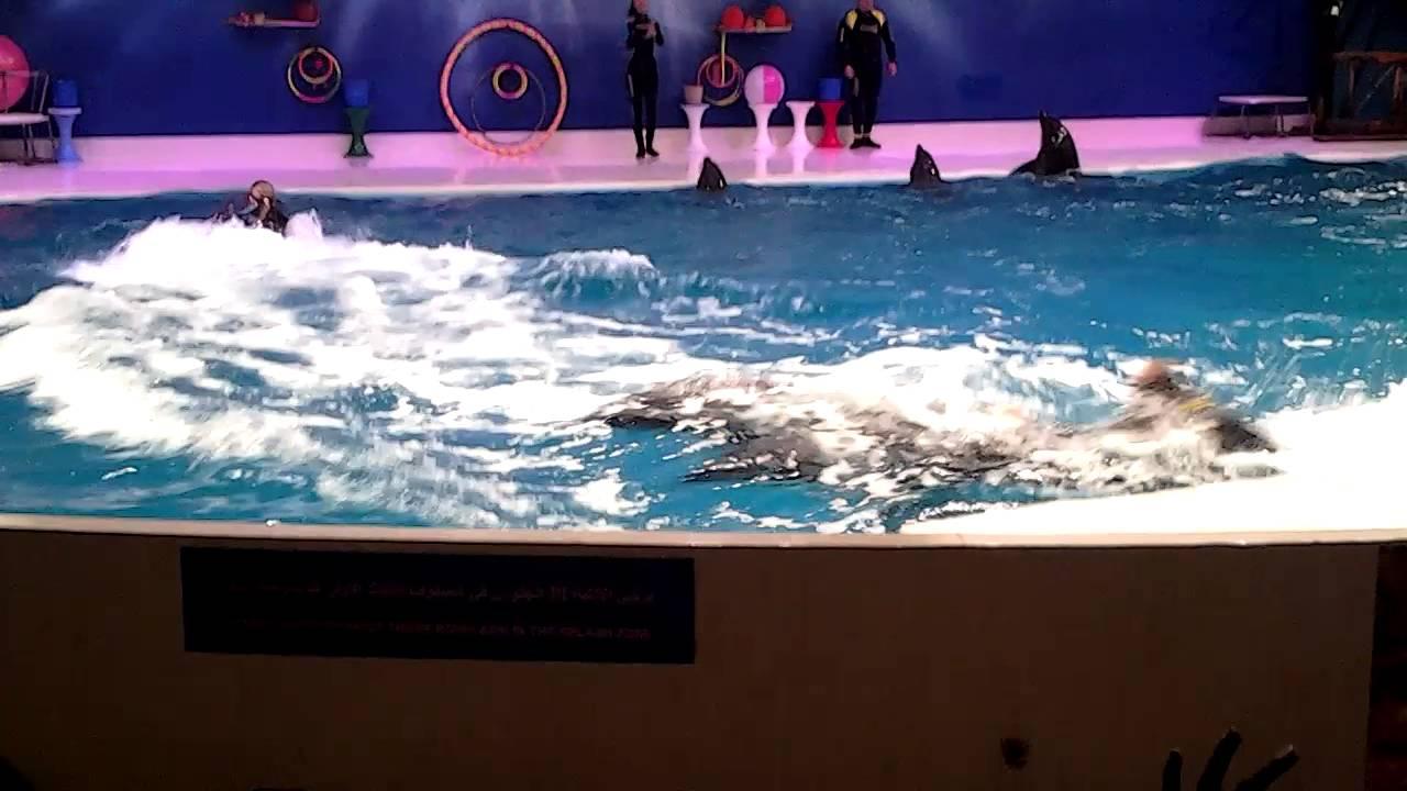 حديقة الخور في دبي عرض الدلافين Youtube