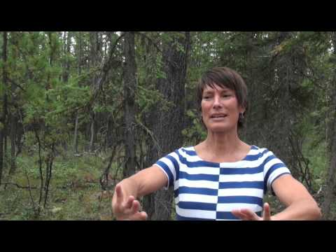 Learning Tlingit Through Story