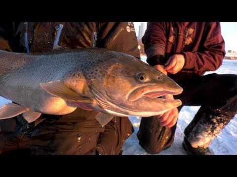 Ice Fishing Giant Trout With Eric Haataja