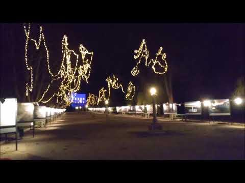 Alaskan Malamute in Christmas Ljubljana: Jakopič Promenade in Tivoli