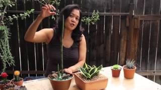 Popular Indoor Succulents