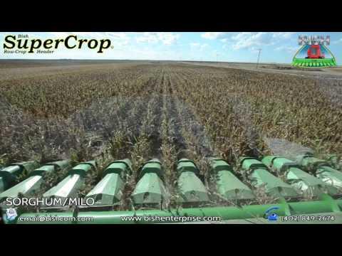 Bish Sorghum/Milo Harvest Long Video