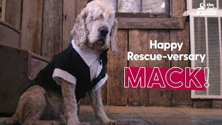 Blind Dog Gets BEST Rescue Party Ever | The Dodo: PARTY ANIMALS thumbnail