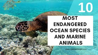 10 Most Endangered Ocean Species and Marine Animals