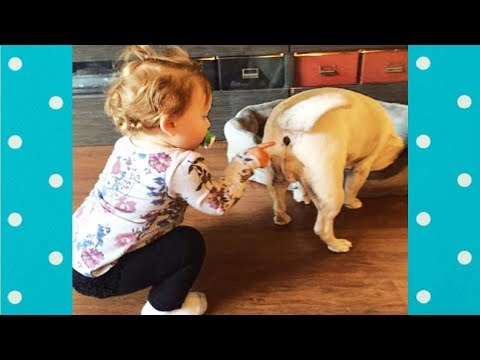Adorable Babies Bullying Dogs - Dog Loves Baby ★ Funny Dogs