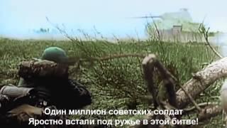 видео Шведская муха