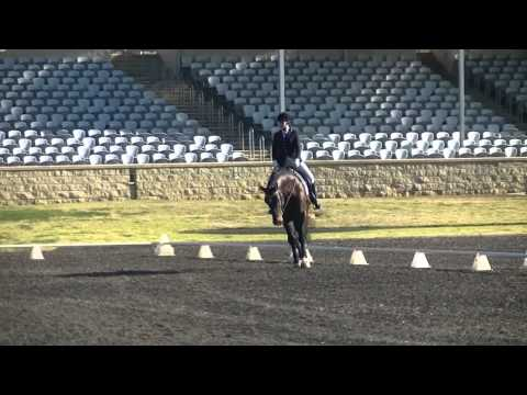 The Belstone Fox at Hawkesbury  Dressage 3rd Aug Novice 2.3