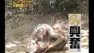 A crazy Japanese tries to play with animals. He is so amazing!