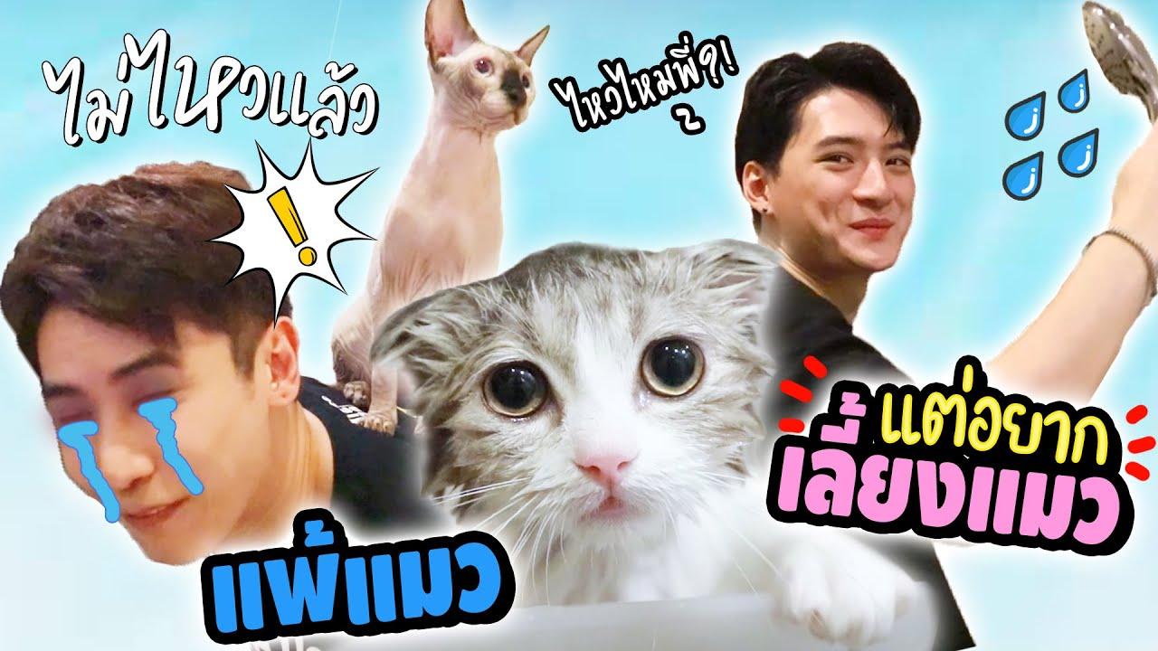 อู๋จุน..คนแพ้แมว มาอยู่กับแมว1คืน😵 (ดูแล้วจะยิ้มตาม🥰) ft. คริส พีรวัส