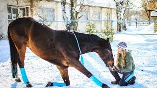 КАК НАУЧИТЬ ЛОШАДЬ ДЕЛАТЬ ПОКЛОН? / Обучение лошади поклону