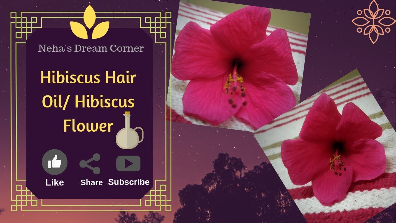 Hibiscus Hair Oil Preparation/Fast Hair Growth/ #Safedbalonkailaj  #Dandrufftreatment #herbalhairoil