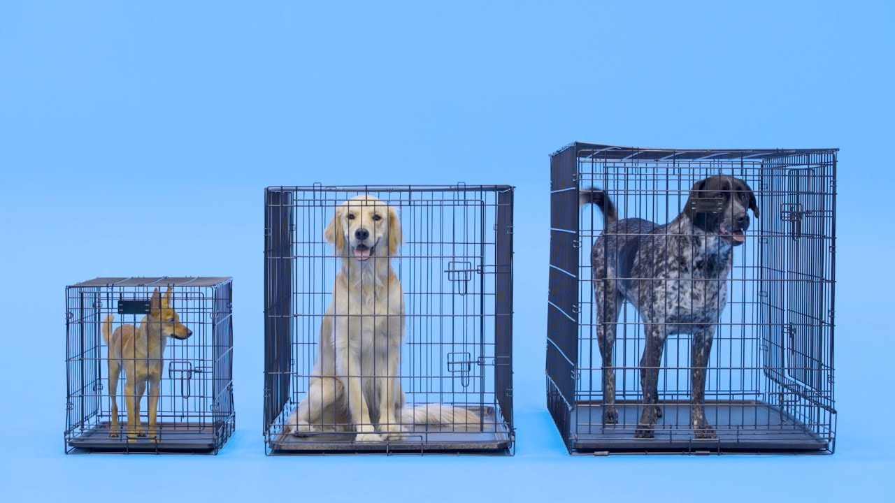Dog Crate Size What Is Best Chewy You