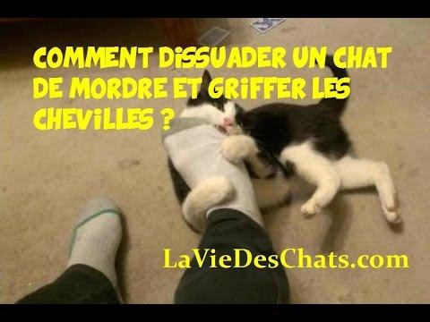 Comment dissuader mon chat 🐱 de mordre et griffer les chevilles