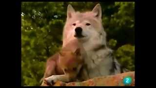 Wolf Song -- Only Time -- Enya