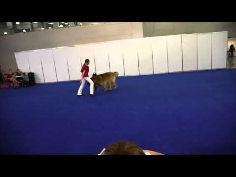 Step Dance Eurasia 2015