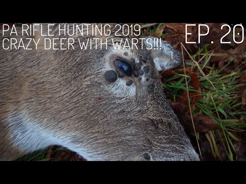 235 Yard Deer Kill!! Pa Deer Hunting 2019 S. 1 Ep. 20