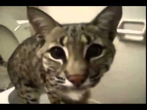 Пугающиеся коты видео