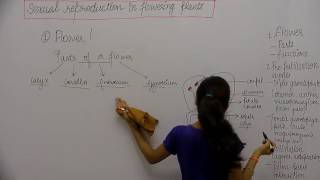 Botany _ XII _ Sexual Reproduction in Flowering Plants _ Part1 _ Parts of Flower _ Manvi Sharma